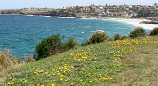 http://www.sydneymarriagecelebrant.com.au/wp-content/uploads/2015/09/beachwedding.jpg